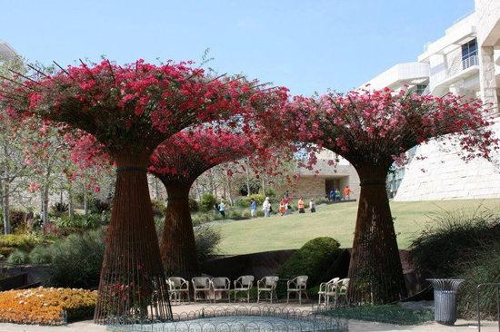 عکس زیبا از درختی با شاخه قرمز