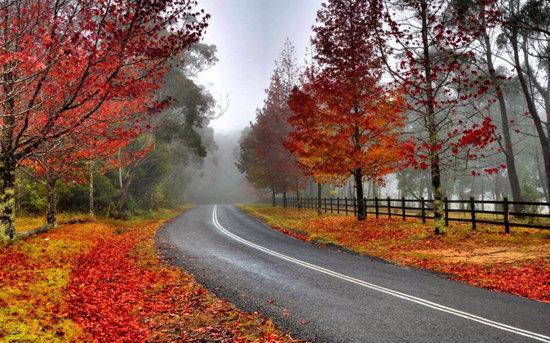 عکس زیبای از منظره پاییزی جالب
